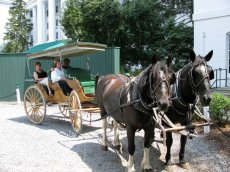 Adoptive Family Photo: Leisurely Carriage Ride, click to view bigger version