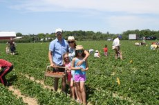 Adoptive Family Photo: Strawberry Picking in the Summer, click to view bigger version