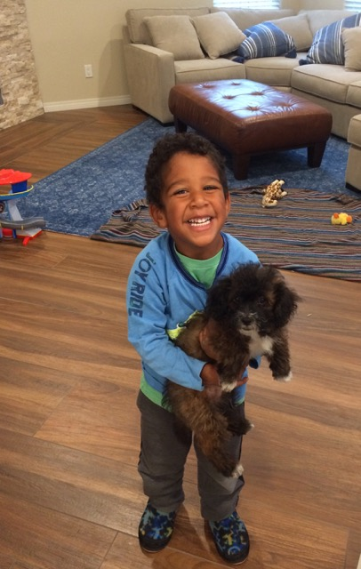 Julian is Everyone's Favorite Dog Sitter
