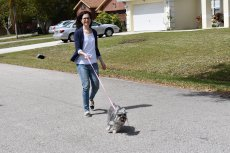 Adoptive Family Photo: Taking Our Dog, Bella, for a Walk