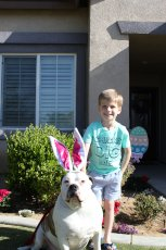 Adoptive Family Photo: Our Easter Bunny, George