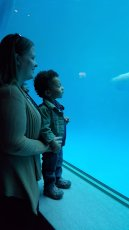 Adoptive Family Photo: Watching the Beluga Whales, click to view bigger version