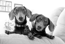 Adoptive Family Photo: Our Pups, Wesley & Riley, click to view bigger version