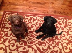 Adoptive Family Photo: Our Dogs, Sydney & Reese