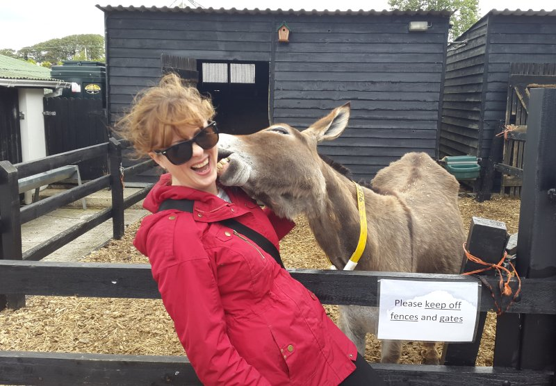 Visiting a Donkey Sanctuary in Ireland