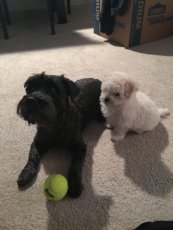 Adoptive Family Photo: Our Dogs, Marie & Tiny, click to view bigger version