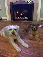 Adoptive Family Photo: Our Dogs - Franklin & Sterling, click to view bigger version