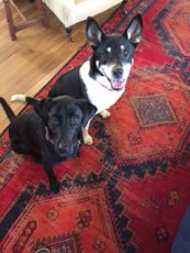 Adoptive Family Photo: Finn & Gherkin Waiting for a Treat, click to view bigger version