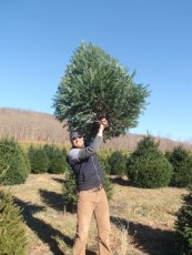 Adoptive Family Photo: David with the Tree We Picked Out at the  Christmas Tree Farm!, click to view bigger version