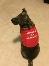 Adoptive Family Photo: Boozer Can't Wait to be a Big Brother!, click to view bigger version