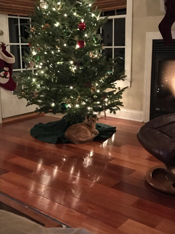 Oscar in His Favorite Christmas Spot
