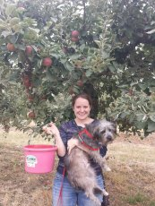 Adoptive Family Photo: Apple Picking with Cooper, click to view bigger version