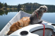 Adoptive Family Photo: Our Pups Love Going Out on the Boat with Us, click to view bigger version