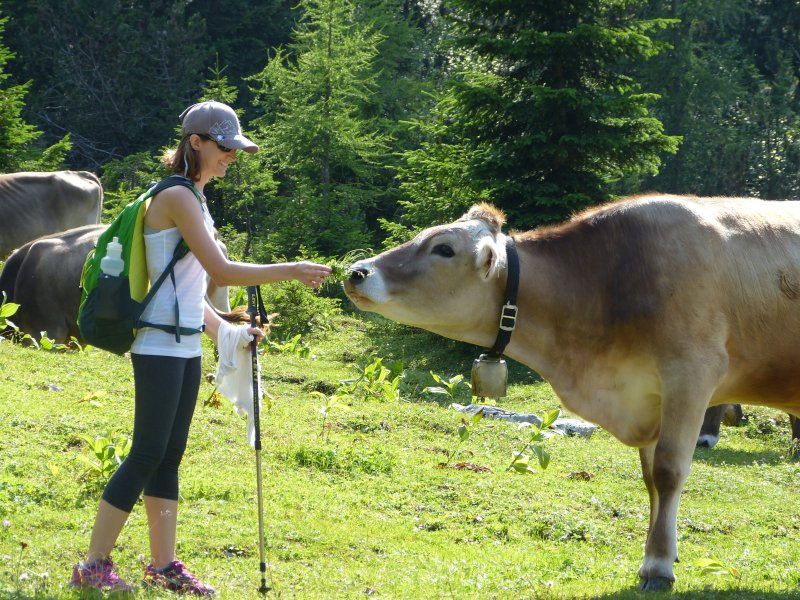 Feeding the Cows While Hiking the German Alps