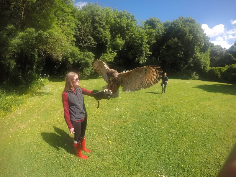 Taylor With a Great Horned Owl in Ireland