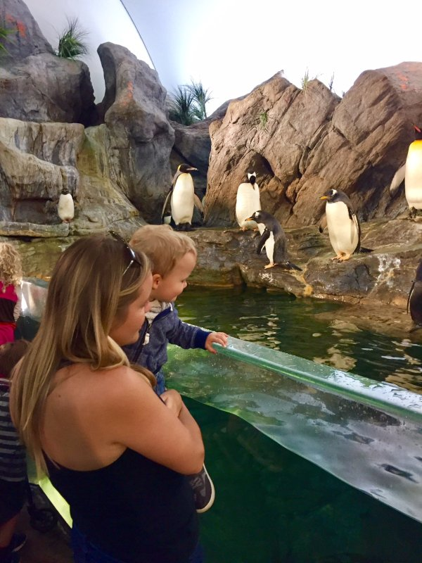 Checking Out the Penguins at the Zoo