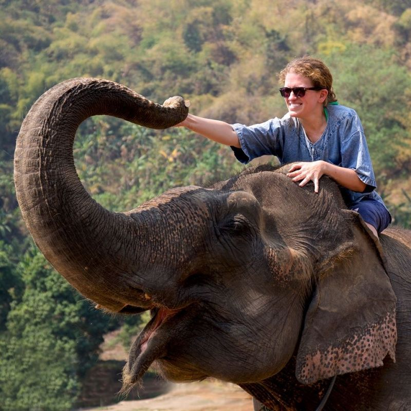 Meeting Elephants in Thailand