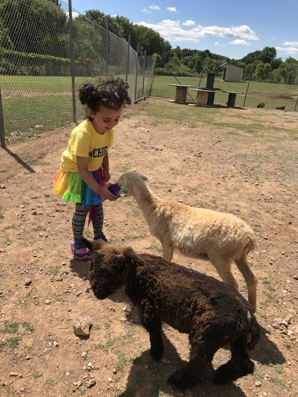 Hanna Feeding Goats at the Local Farm