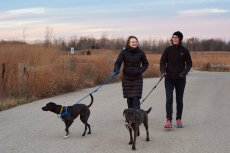 Adoptive Family Photo: Christmas Hike With the Pups, click to view bigger version