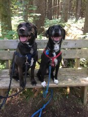Adoptive Family Photo: Lexie & Raven Taking a Break During a Hike, click to view bigger version
