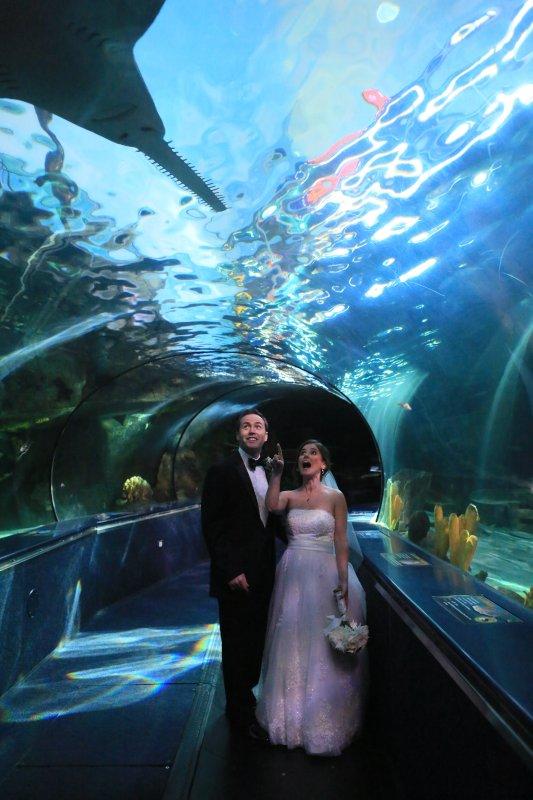 Celebrating Our Big Day at the Aquarium