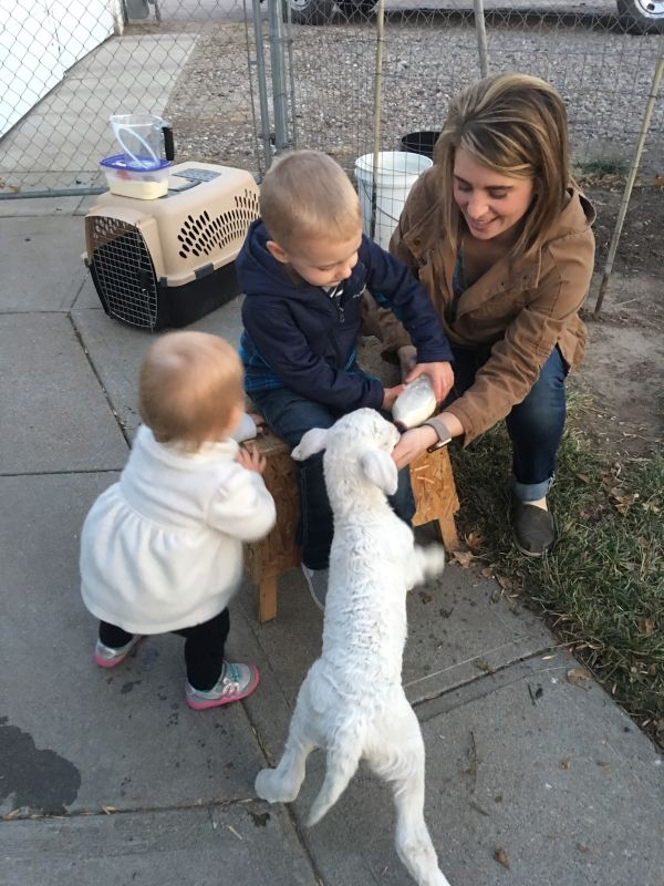 Feeding a Little Lamb with Our Niece & Nephew