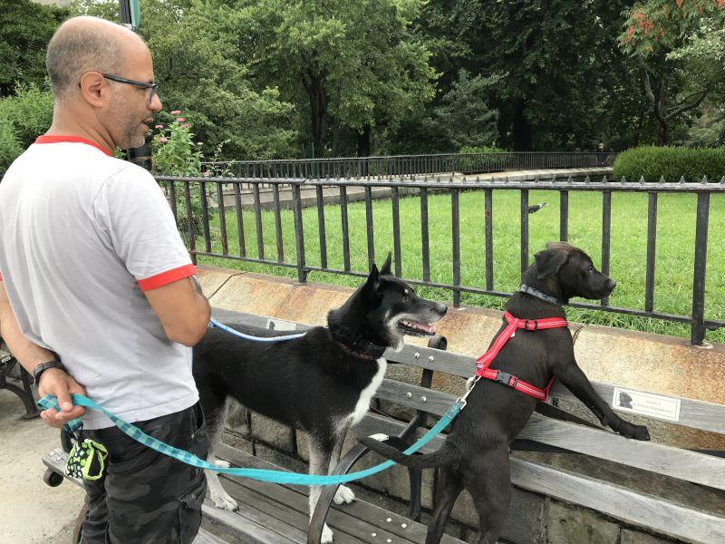 Walking the Pups