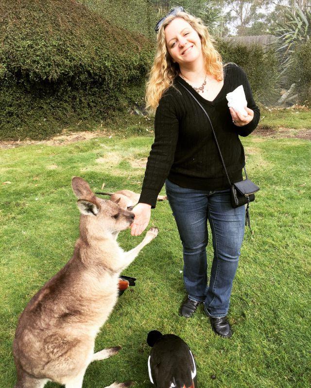 Feeding Kangaroos in Australia