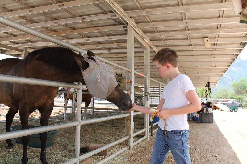 George Giving a Horse a Treat After a Lesson