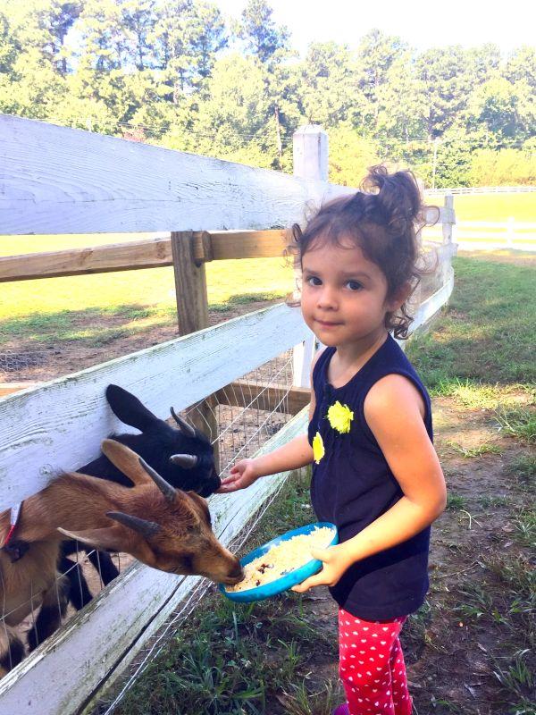 Feeding Animals at a Farm