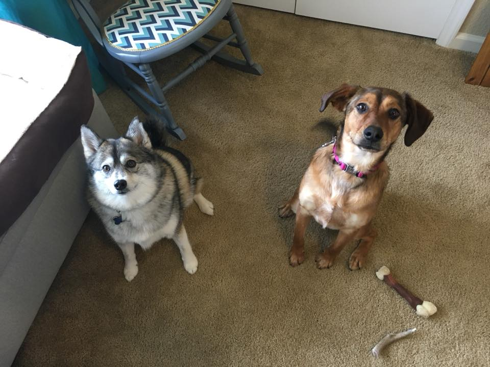 Our Two Dogs, Oliver & Sadie