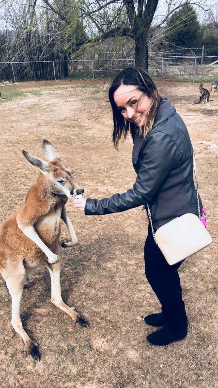 Feeding the Kangaroos