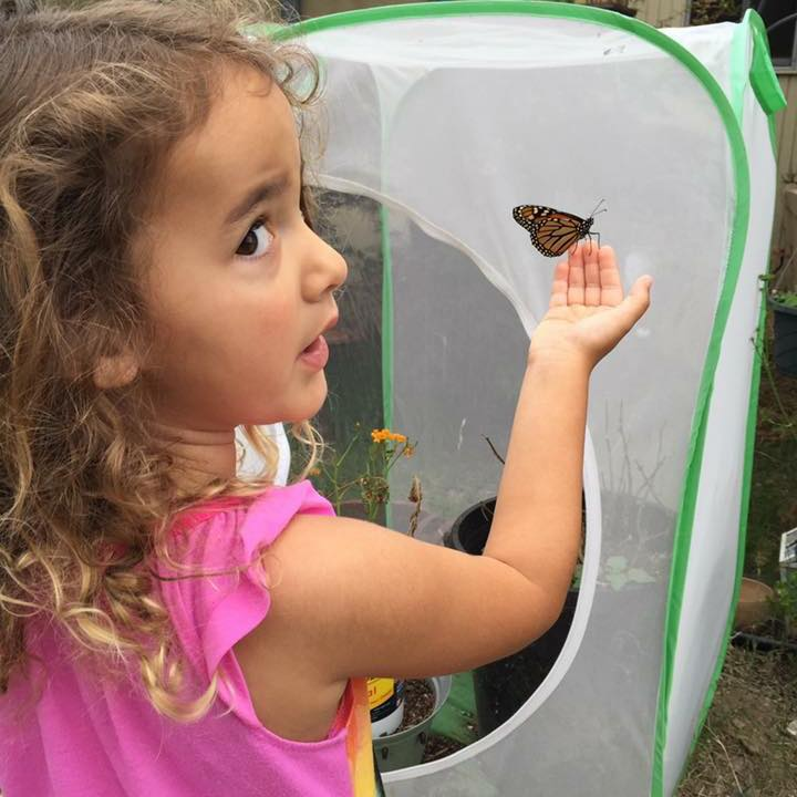Quinne & One of Our Handraised Monarch Butterflies