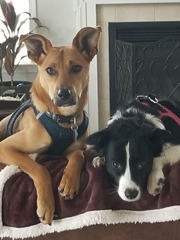 Our Pups, Sunny & Ringo