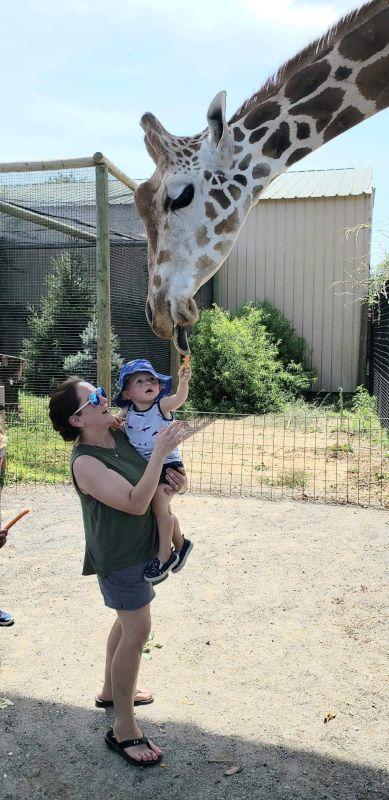 Fun Feeding a Giraffe