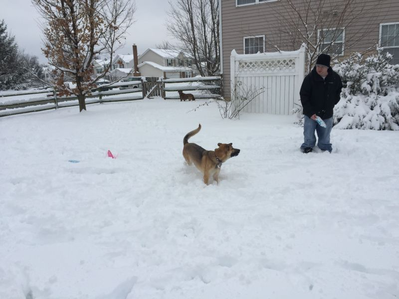 Frisbee in the Snow