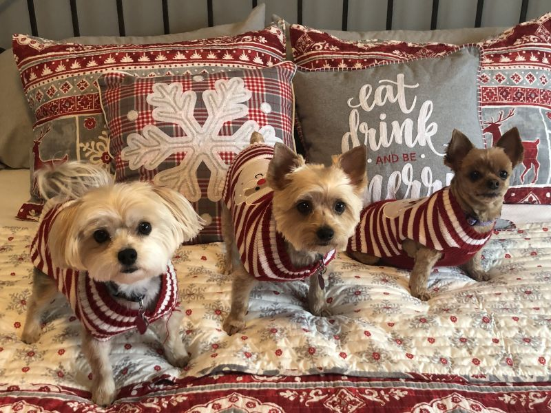 Our Fur Babies - Tilly, Reese & Roe