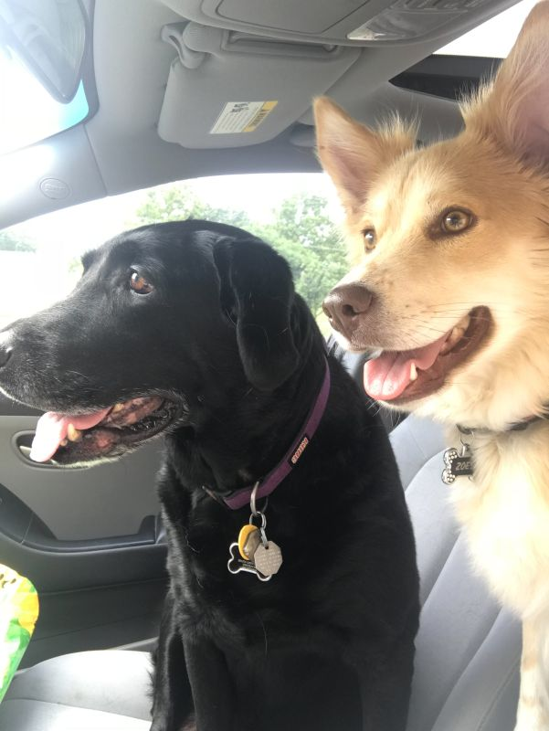 Our Pups Ready to Ride