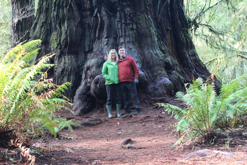 Feeling Small Next to a Sequoia in California