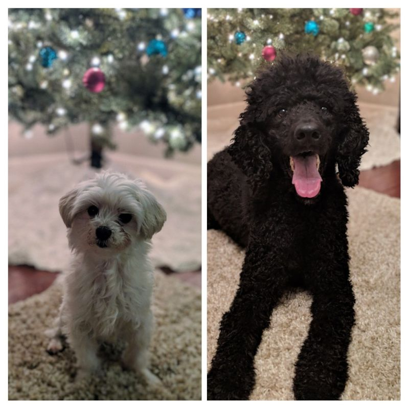 Our Pups, Louie & Cosmo