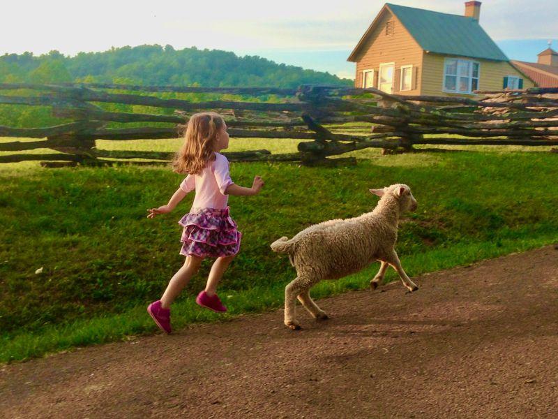 Our Niece Skips to the Barn with Lucky the Lamb!