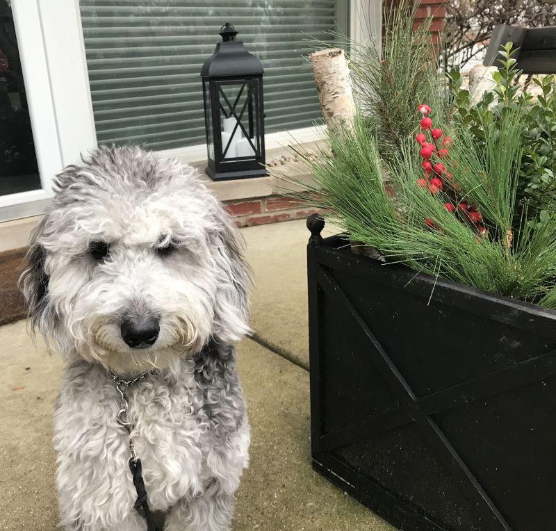 Our Dog, Lola