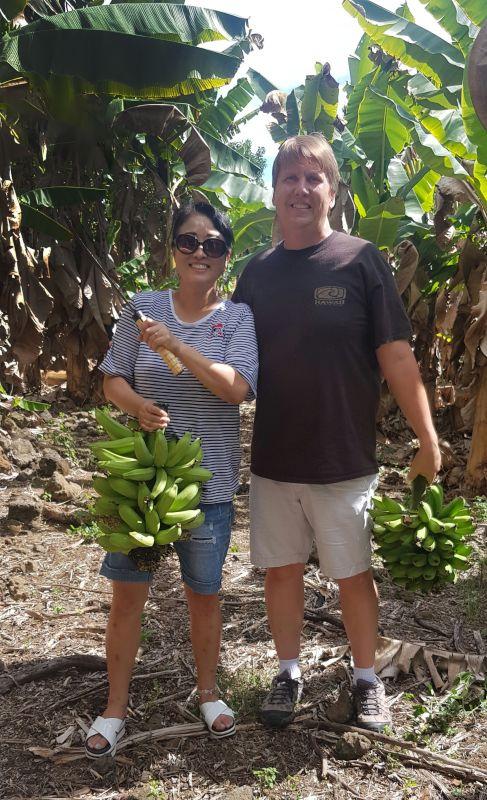 Banana Farm in Hawaii