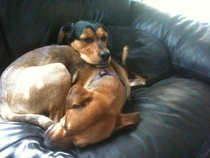 Loki & Samson Snuggling