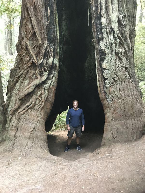 Exploring the Redwoods