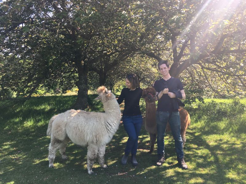 At an Alpaca Rescue in England