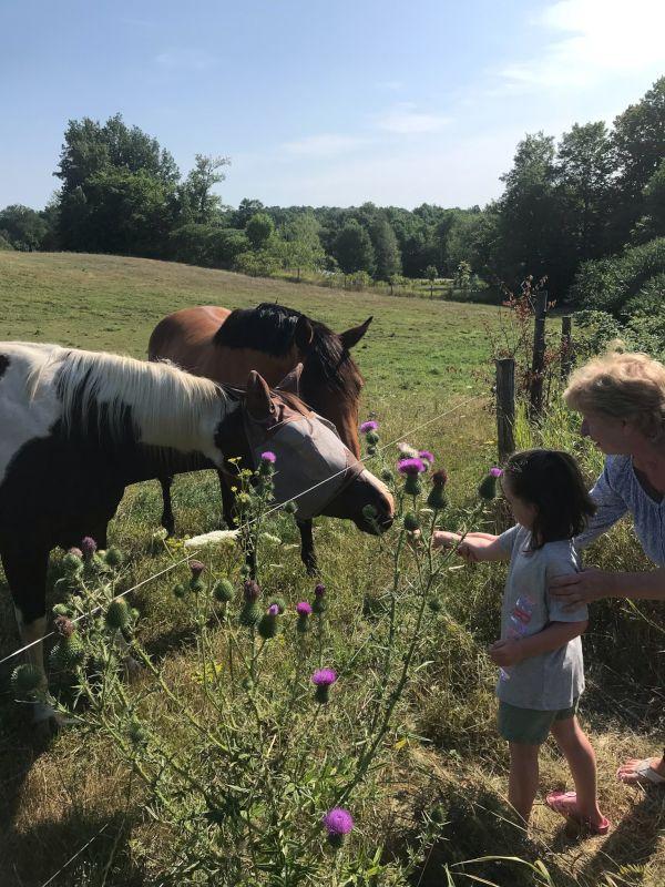 Feeding Horses at Nona's House