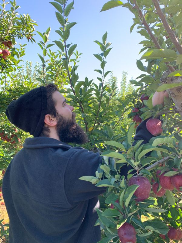 Apple Picking in the Crisp Autumn Air