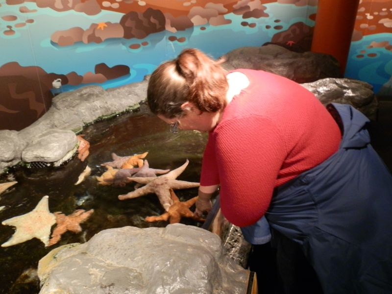 Touching Star Fish in San Diego