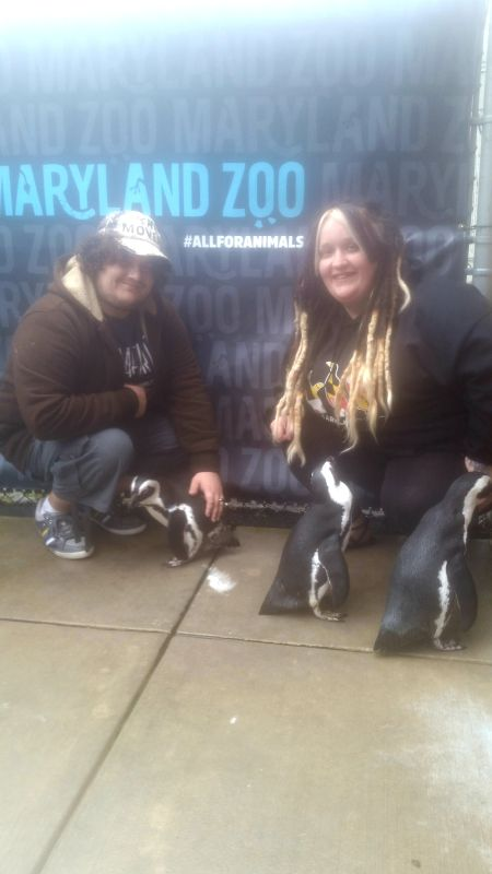 At the Zoo Meeting Penguins